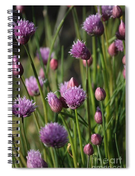 Chive Flowers Spiral Notebook