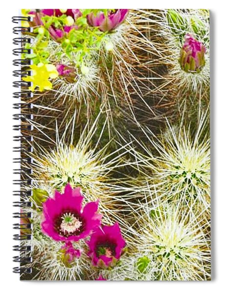 Cholla Cactus Blooms Spiral Notebook