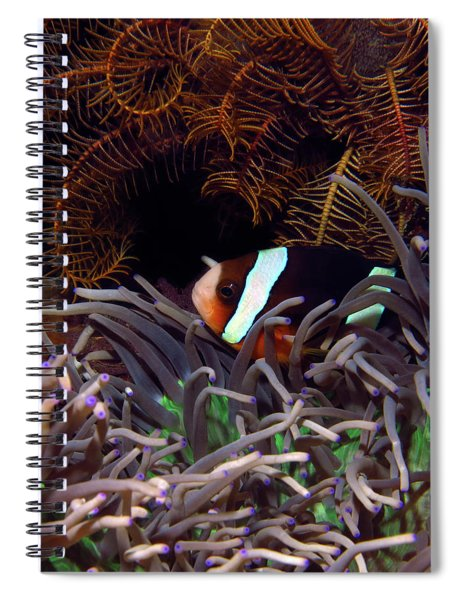 Clark's Anemonefish, Indonesia 2 Spiral Notebook