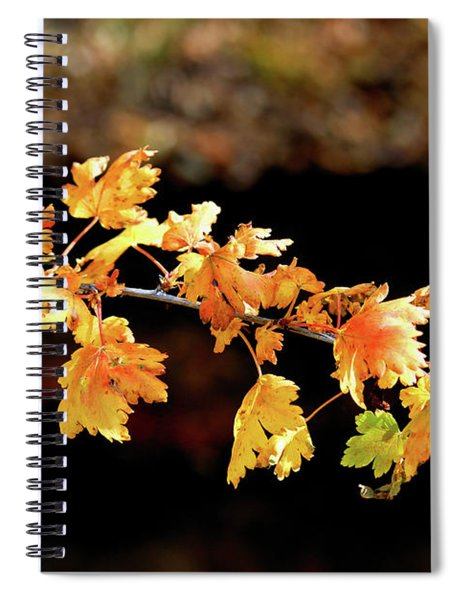 Classic Colors Spiral Notebook