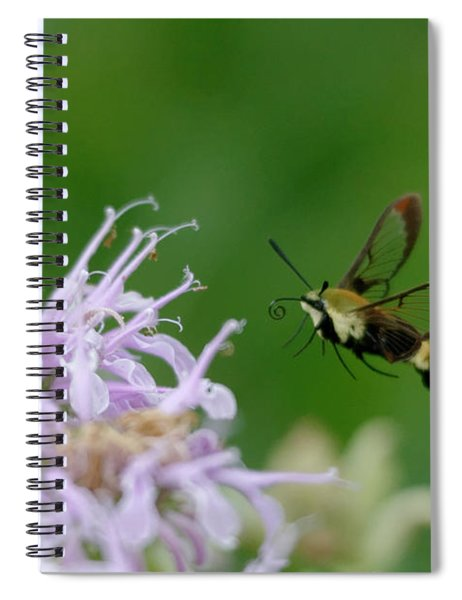 Clearwing Moth Spiral Notebook
