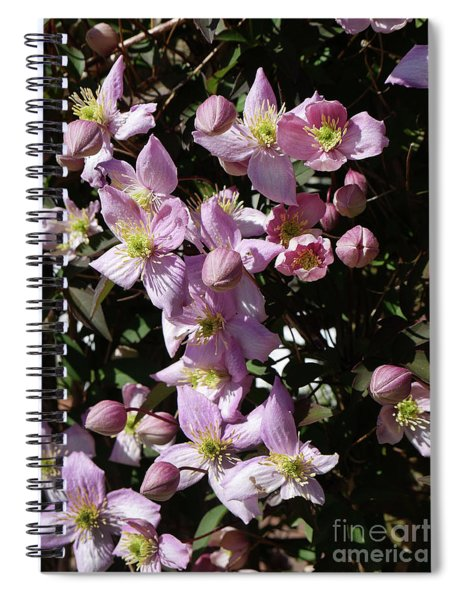 Clematis Montana  In Full Bloom Spiral Notebook