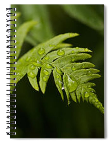 Close-up Of A Raindrops On Fern Leaves Spiral Notebook