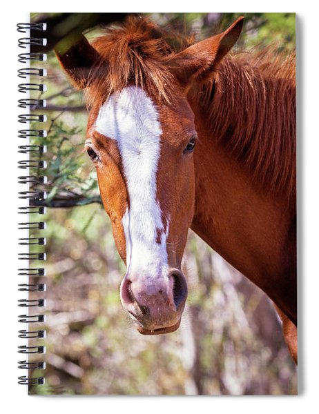 Closeup Of Beautiful Wild Horse With Copy Space Spiral Notebook