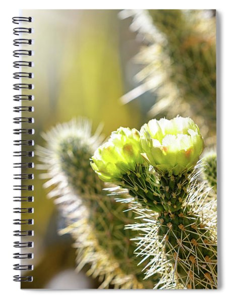 Closeup Of Blooming Cholla Cactus With Copy Space Spiral Notebook