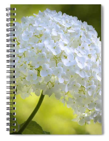 Cluster Spiral Notebook
