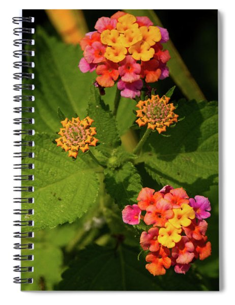 Cluster Of Lantana Flowers Spiral Notebook