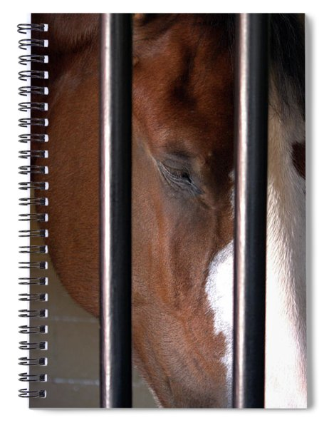 Clydesdale Spiral Notebook