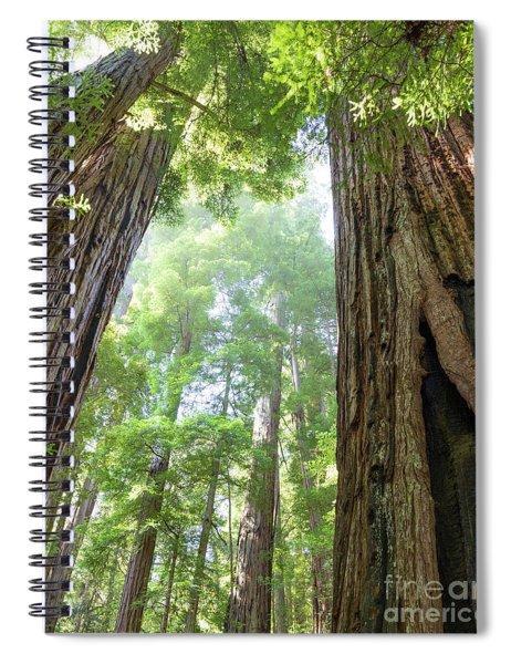 Coastal Redwoods  Spiral Notebook