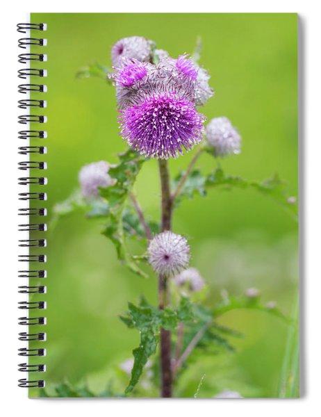 Cobweb Thistle Spiral Notebook