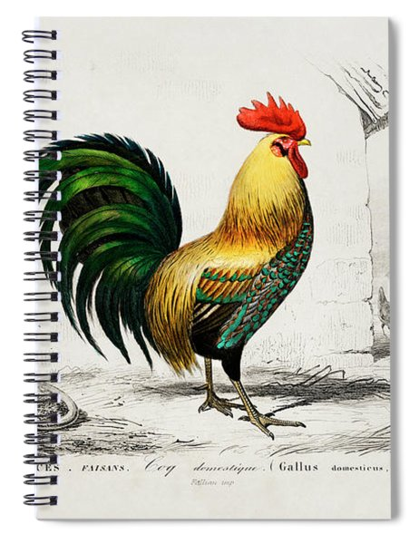 Cock Illustrated By Charles Dessalines D Orbigny Spiral Notebook