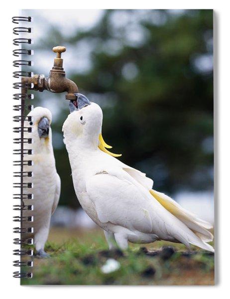 Cockatiel Nymphicus Hollandicus Spiral Notebook
