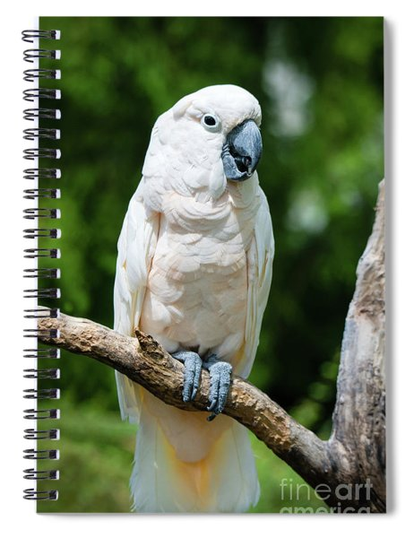 Cockatoo Spiral Notebook