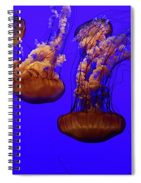 Collection Of Jellyfish Spiral Notebook