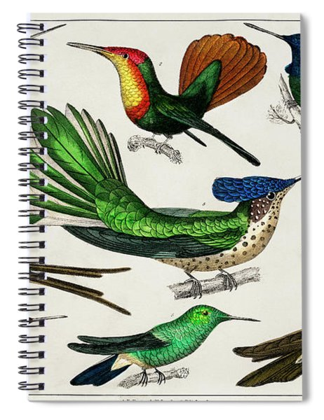 Collection Of Various Birds Spiral Notebook