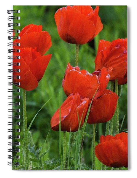 Spiral Notebook featuring the photograph Colorado Wild Poppies by John De Bord