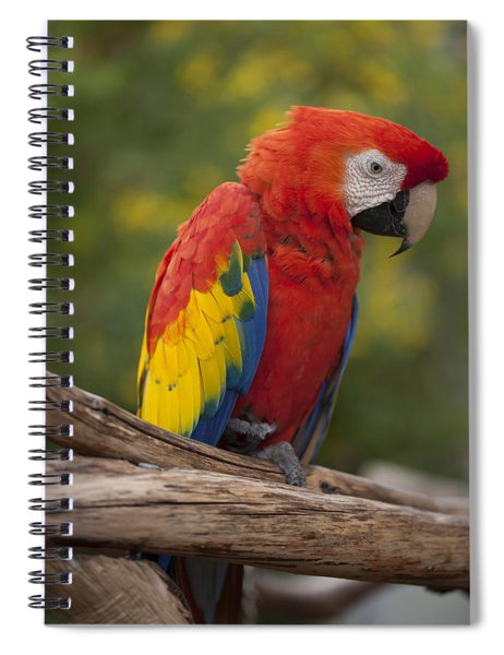 Colorful Bird Spiral Notebook