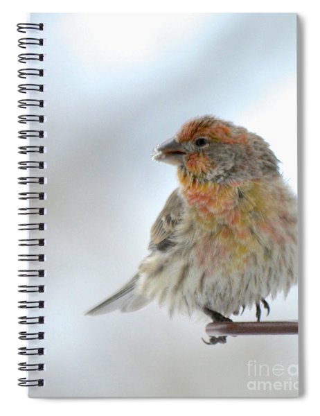 Colorful Finch Eating Breakfast Spiral Notebook