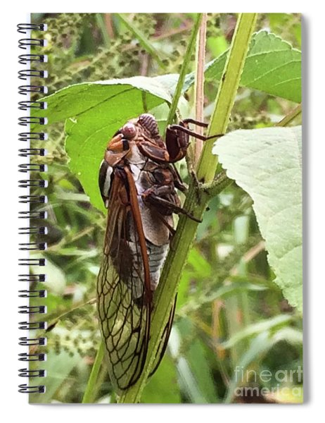Colorful Summer Cicada Spiral Notebook