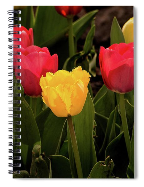 Colorful Tulips Spiral Notebook