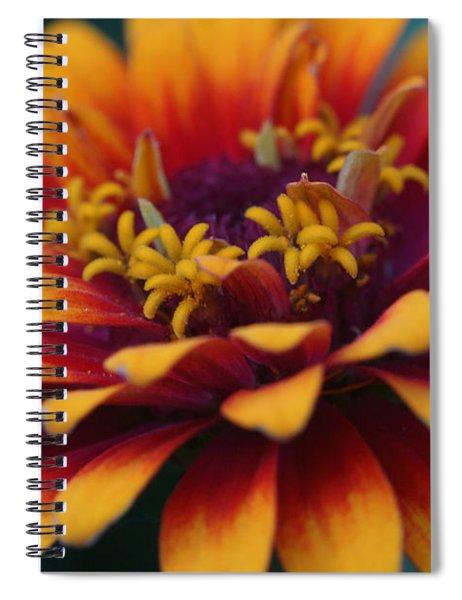Colorful Zinnia 1 Spiral Notebook