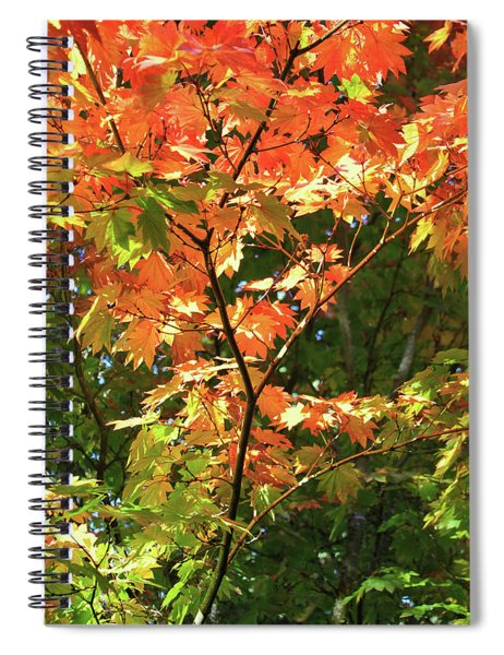 Colors Of An Autumn Tree Spiral Notebook