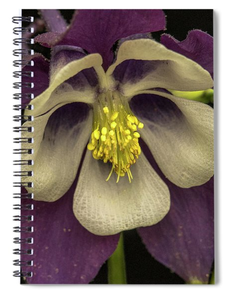 Columbine At Dusk Spiral Notebook