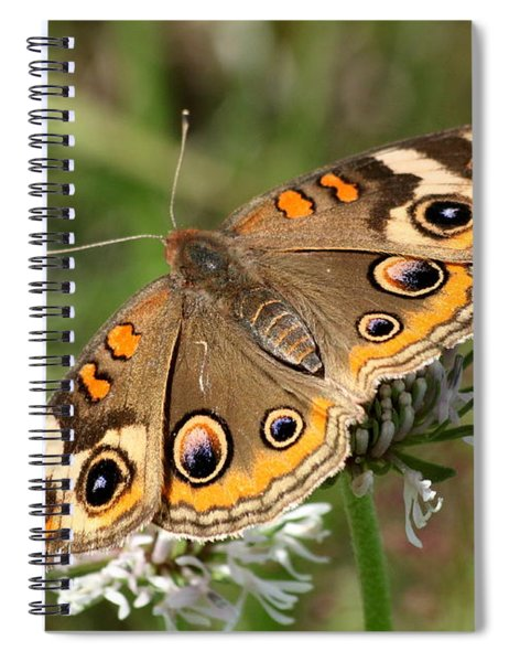 Common Buckeye Butterfly Close-up Spiral Notebook