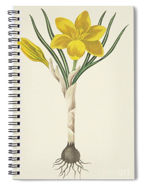 Common Yellow Crocus Spiral Notebook
