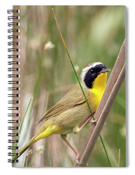 Common Yellowthroat In The Marsh Spiral Notebook