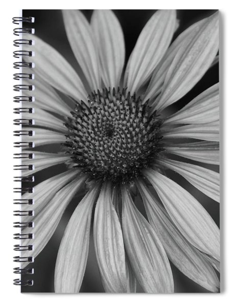 Coneflower In Black And White Spiral Notebook