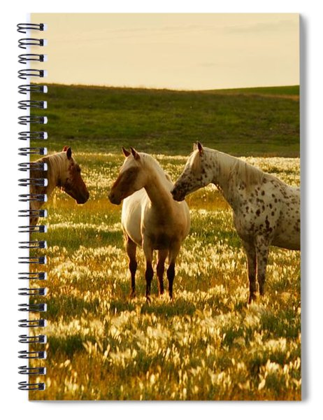 The Conference Spiral Notebook