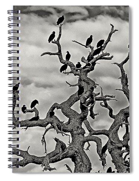 Congress Of Vultures Spiral Notebook