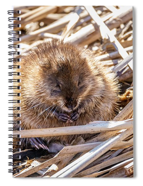 Content Mildred Spiral Notebook