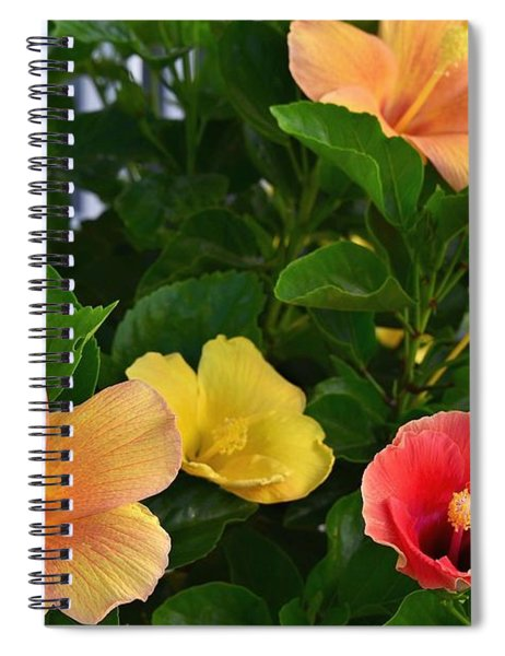 Contrast Of Colors Spiral Notebook
