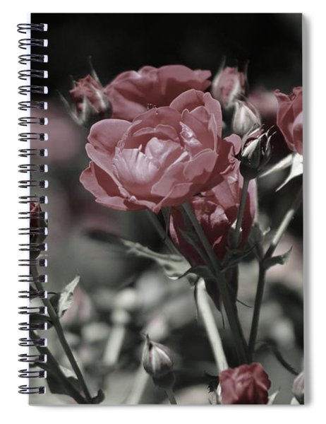 Copper Rouge Rose In Almost Black And White Spiral Notebook