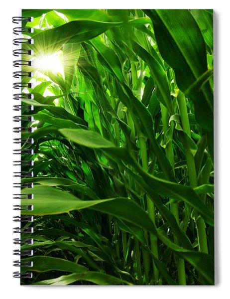 Corn Field Spiral Notebook