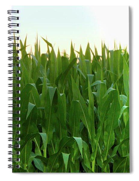 Corn Of July Spiral Notebook