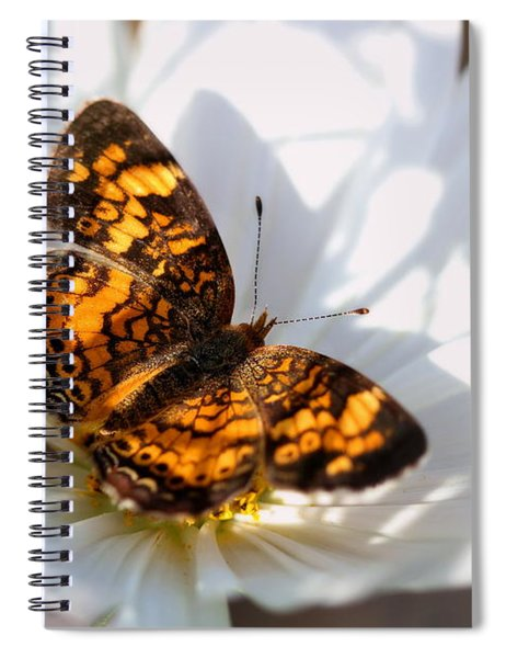 Pearl Crescent Butterfly On White Cosmo Flower Spiral Notebook