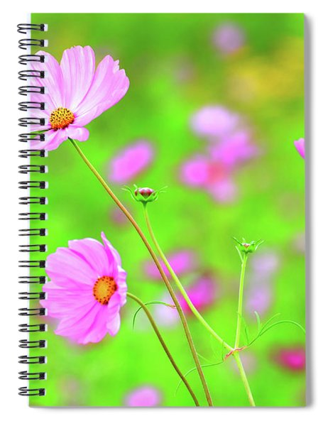 Cosmos Blooming In A Meadow Spiral Notebook