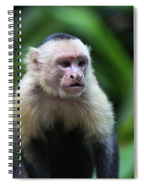 Costa Monkey 1 Spiral Notebook