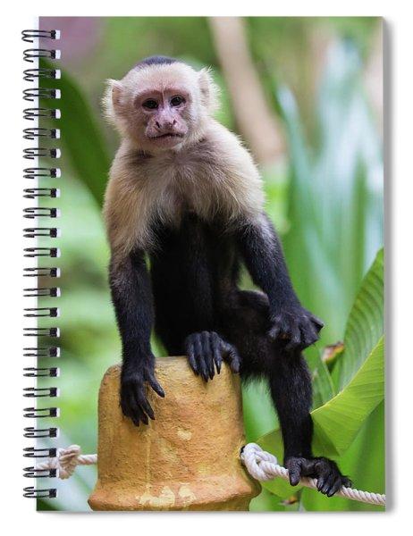 Costa Monkey 2 Spiral Notebook
