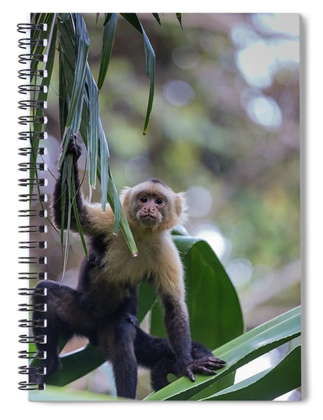Costa Monkey 3 Spiral Notebook