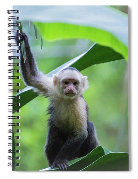 Costa Rica Monkeys 1 Spiral Notebook