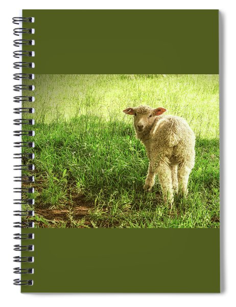 Cotswold Sheep Spiral Notebook