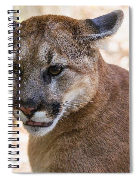 Cougar Portrait Spiral Notebook