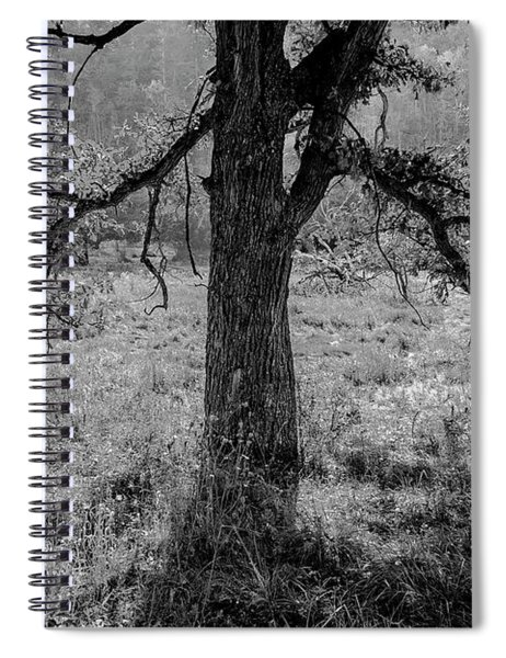 Coulee Oak Spiral Notebook