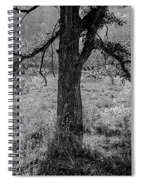 Coulee Oak Spiral Notebook