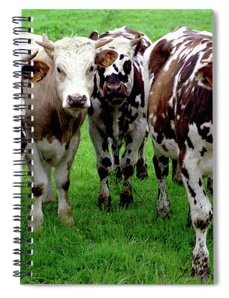 Cow Group Spiral Notebook