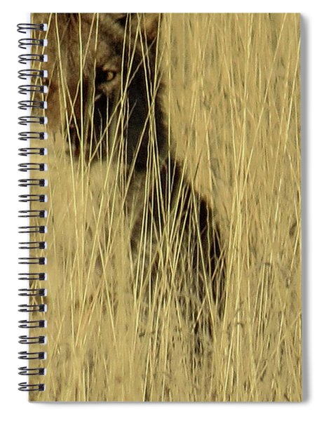 Coyote 3 Spiral Notebook